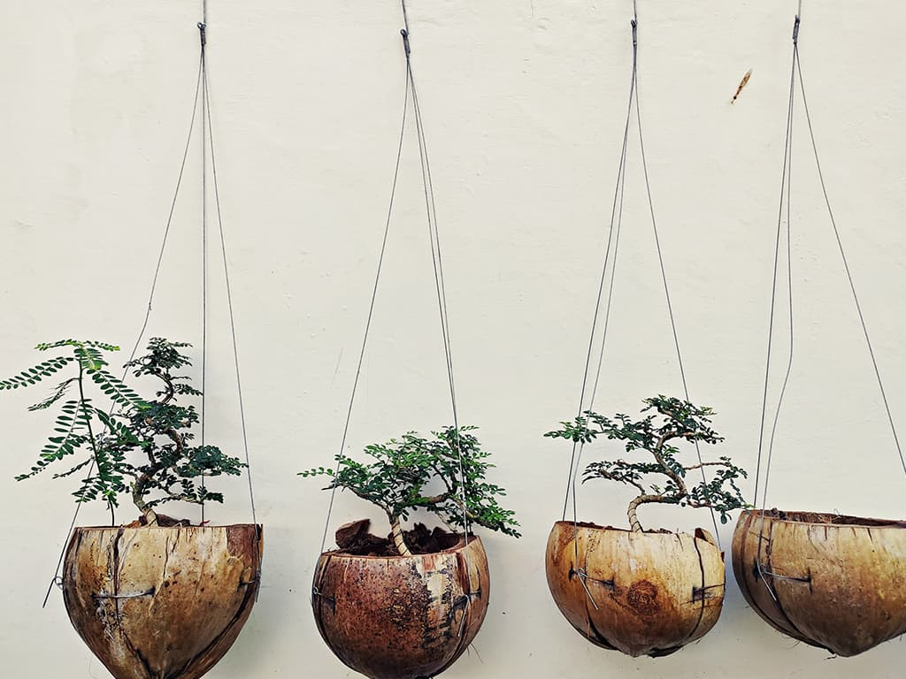 Coconut Shell Hanging Planters
